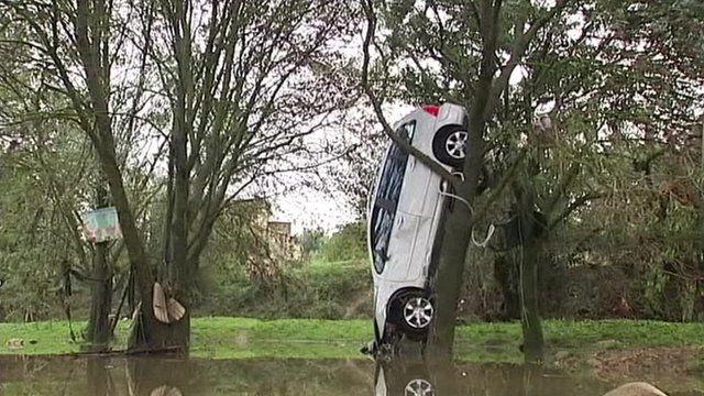 car-in-tree